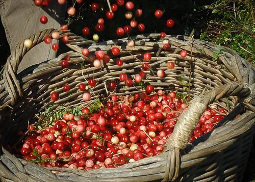 Kopje koffie van Nieuw MOS Natuurvoeding